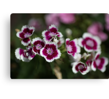 We Are Tiny Pink and White Canvas Print