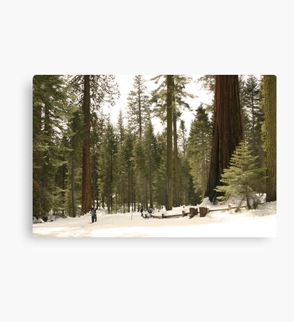 Sequoia Scale Canvas Print