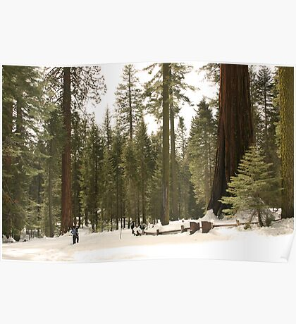 Sequoia Scale Poster