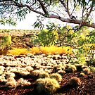 Spinifex and Red Earth by Larry149