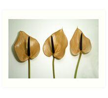 Three Orange Flowers Art Print