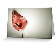Single Flower Greeting Card