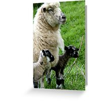 Proud Mum with Twins! - Sheep - NZ Southland Greeting Card
