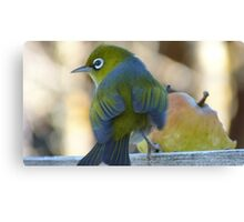 Flutter! - Silvereye - Wax Eye - New Zealand Canvas Print