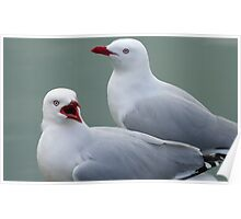 What's going on! Seagull - Port Chalmers Otago New Zealand Poster