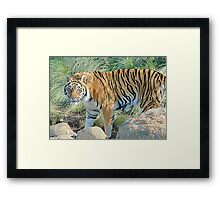 Heres Watching You KId ! Framed Print