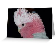 Do you like my hair do! - Rose-Breasted Cockatoo - New Zealand Greeting Card