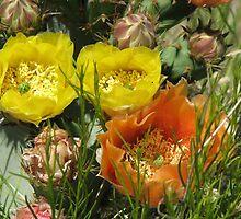 Cactus Flowers by aaronson24