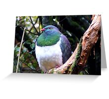 Does this bib fit!! - Wood Pigeon - Dolamore Park - New Zealand Greeting Card