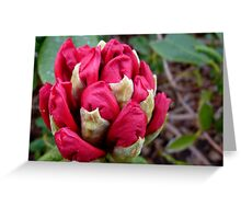 Cherry Pocket Hankey! - Rhododendron - Gore Gardens - New Zealand Greeting Card