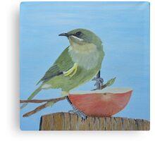 Bellbird Oil Painiting - Southland New Zealand Canvas Print