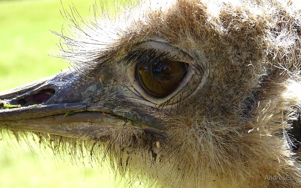The Eye of Emu - NZ - Invercargill - Southland by AndreaEL