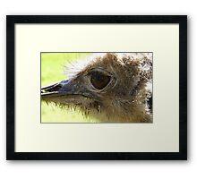 The Eye of Emu - NZ - Invercargill - Southland Framed Print