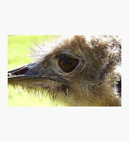 The Eye of Emu - NZ - Invercargill - Southland Photographic Print