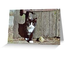 Felix  : Here comes trouble! Greeting Card