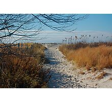 Walk path in the sand Photographic Print