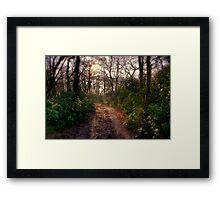 Forest Track Framed Print