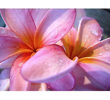 Frangipani Pink II Photographic Print