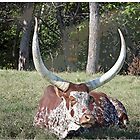 Texas Longhorn by Maria White