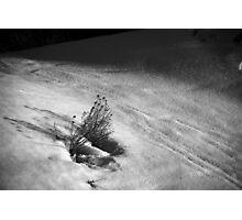 Rabbit Brush in Snow Photographic Print