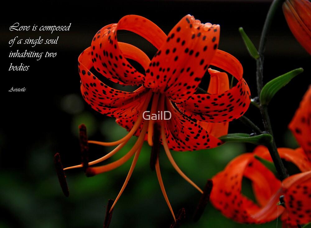 Card by GailD