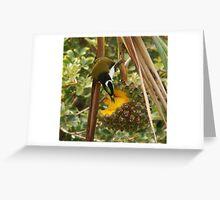 Fruit eating bird Greeting Card