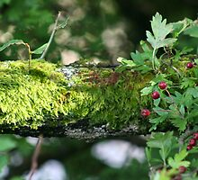 Ferny Branch & Red Berries by Larry149