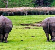 two rhino's three zebra's by Beverley Ferguson