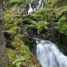 Tom Gill Falls by Larry149
