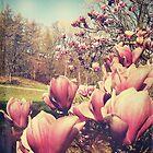 Spring Flowers by Phil Perkins