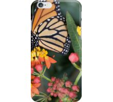 Butterfly collects nectar from a flower  iPhone Case/Skin