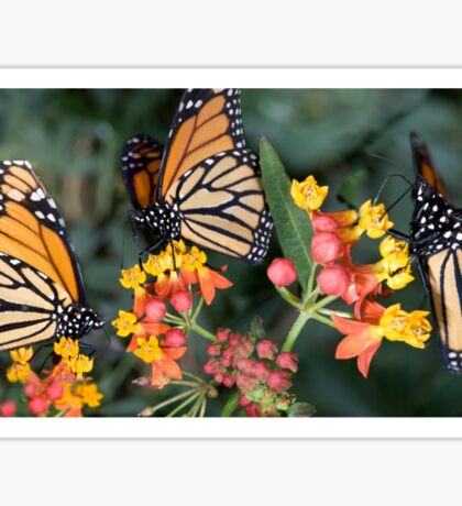 Butterfly collects nectar from a flower  Sticker