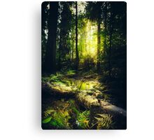 Down the dark ravine Canvas Print