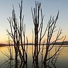 Hume Weir Tree by CWerk