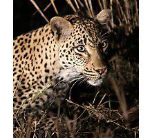Leopard(kikilezi) on the hunt Photographic Print