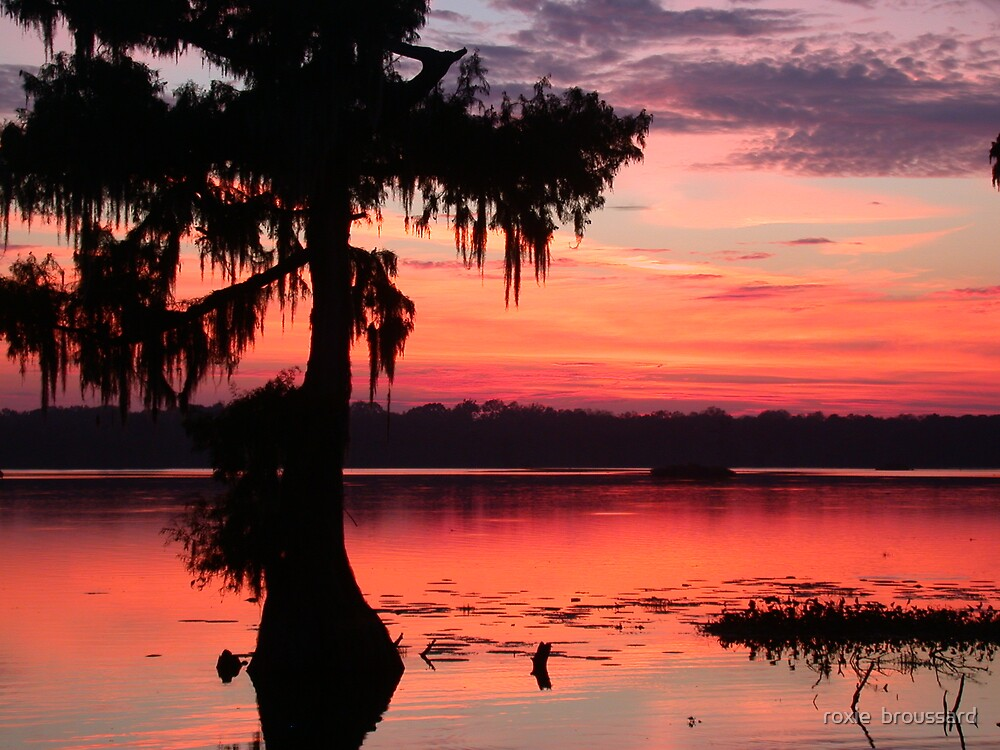 Evening Swamp by roxie  broussard
