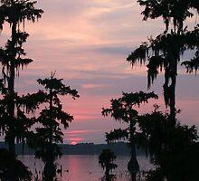 Lake Martin Swamp by roxie  broussard