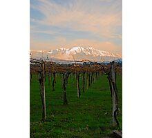Fresh Vines Photographic Print