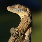 Tree Hugger... - Merten's Water Monitor by Steve Bullock