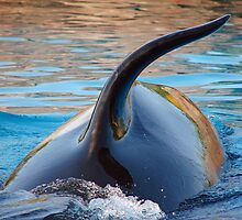 Playful  Whale by redford