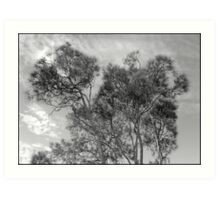 tracery of trees Art Print