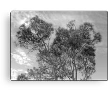 tracery of trees Canvas Print
