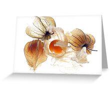 Physallis Greeting Card