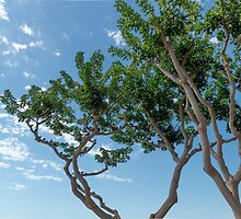 San Diego Scenic Tree by Dennis Schaefer
