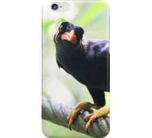 Common Hill Mynah - Beo iPhone Case/Skin