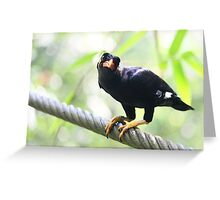 Common Hill Mynah - Beo Greeting Card