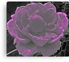 Wow Flower Canvas Print
