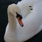 Swan close up by PearlyPics