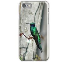 Sparkling Violetear Hummingbird iPhone Case/Skin