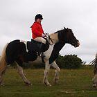 Walking Horse by JILLIAN  POSSEHL